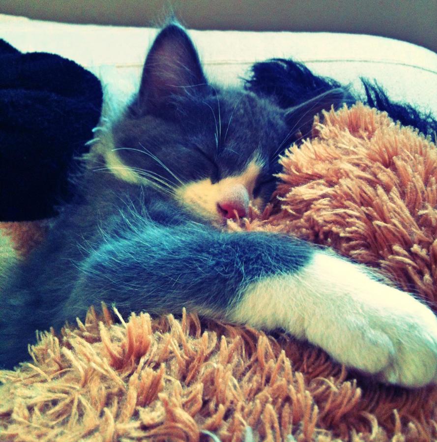Maji svatki za gnjaviti...[Ne zamerite mi...] - Page 2 My_little_cat_loved_by_nowelles-d6l013t