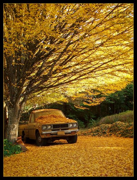 Volim žuto - Page 3 139d4806f5e53acc5755da39c8d2a14c