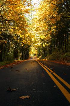 Fall Color in Oregon