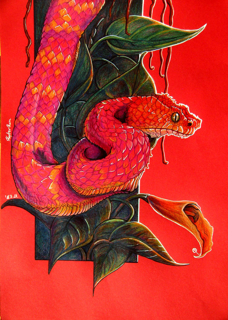Red bush viper snake by Krystear on DeviantArt