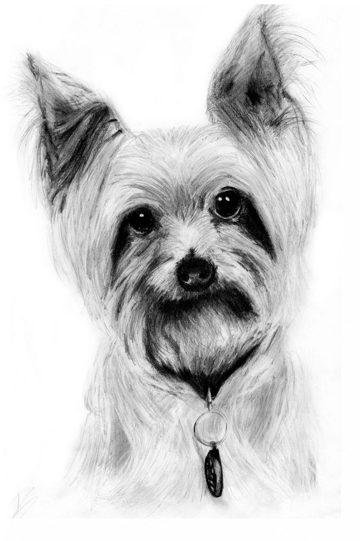 how to draw a cairn terrier