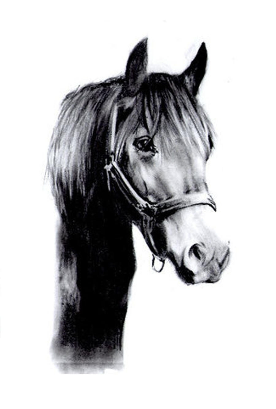 Black Horse Drawing By Slippy88 On DeviantArt