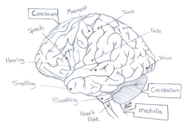 Brain...? by Sprx-77AntauriGibson