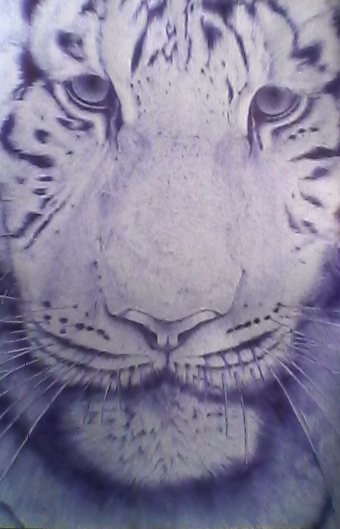 - Tiger - Ball Point Pen Drawing by KisaMake