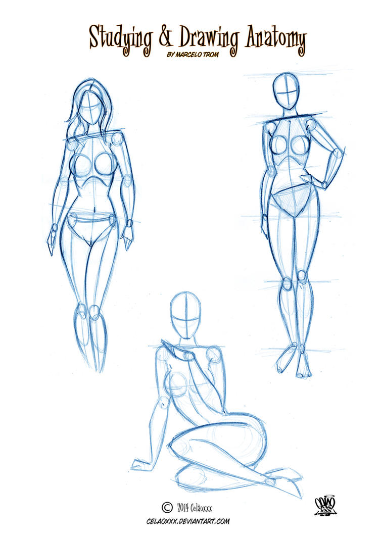Anatomy Drawing for Artists by celaoxxx on DeviantArt