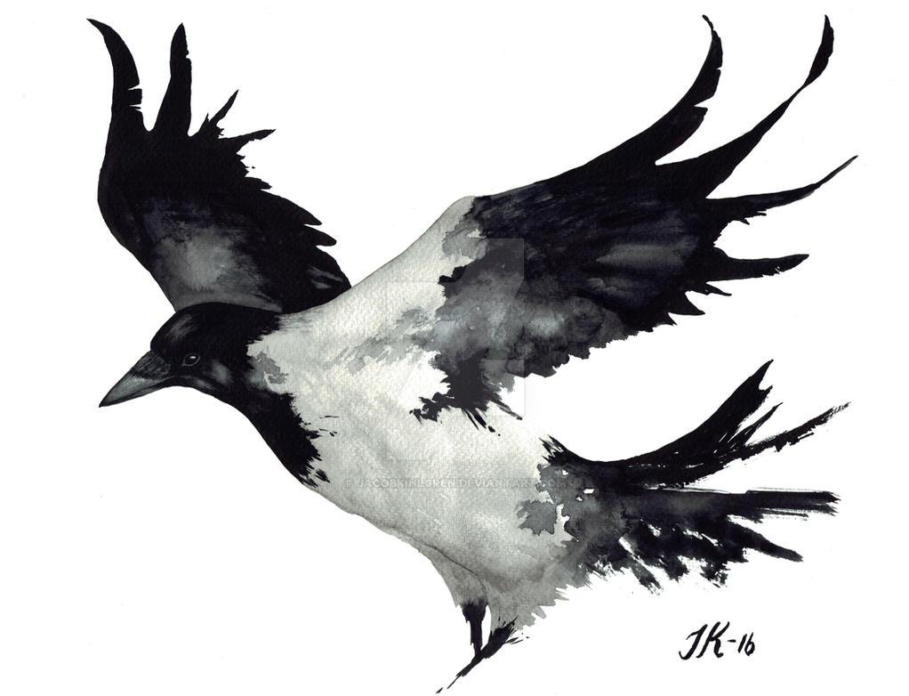 Crow (bird #29). by JacobKihlgren
