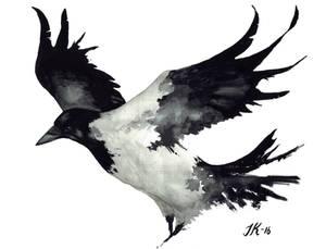 Crow (bird #29).