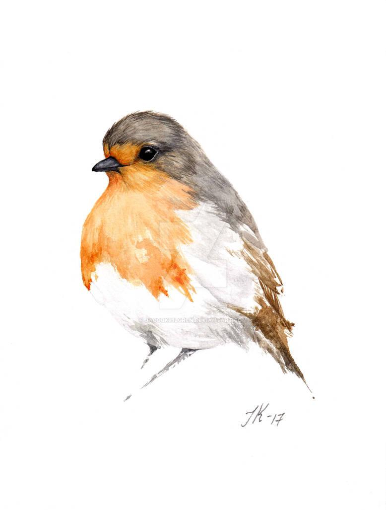Robin (bird #34).