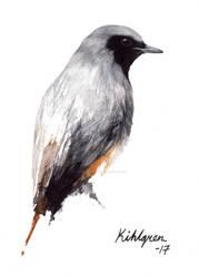Black redstart (bird #37).