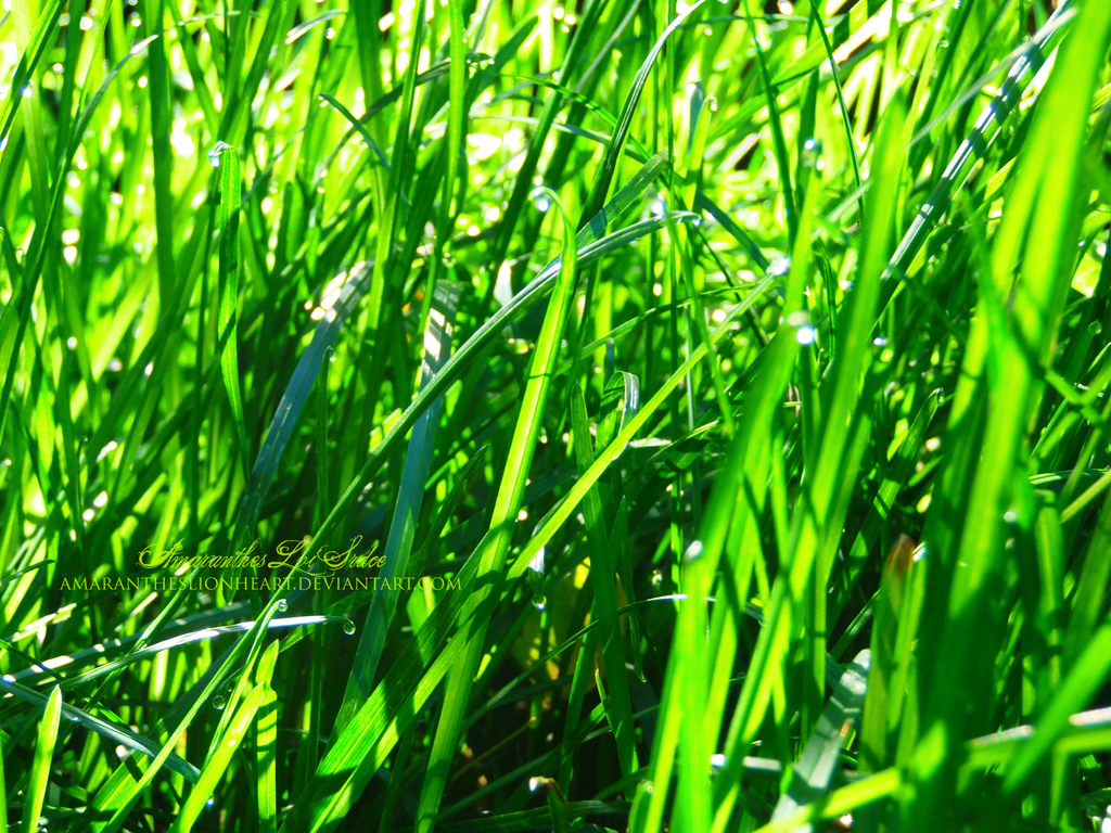 Grass 2 by AmaranthesLionHeart