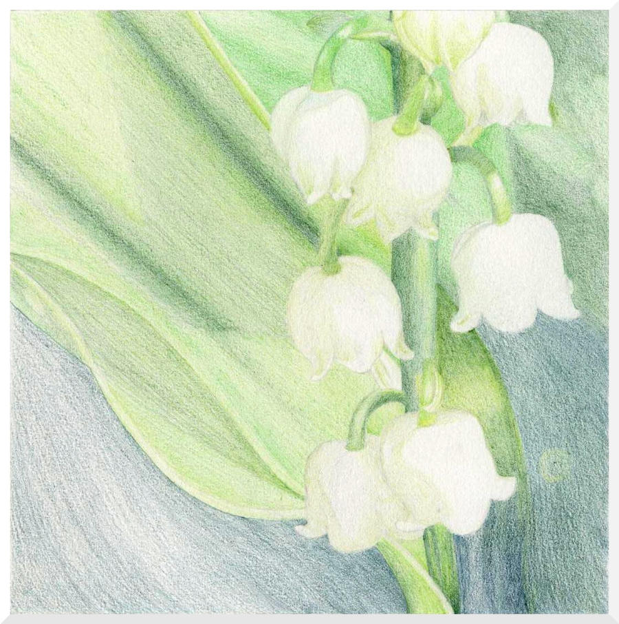 Lily Of The Valley By Nataliebeth On DeviantArt