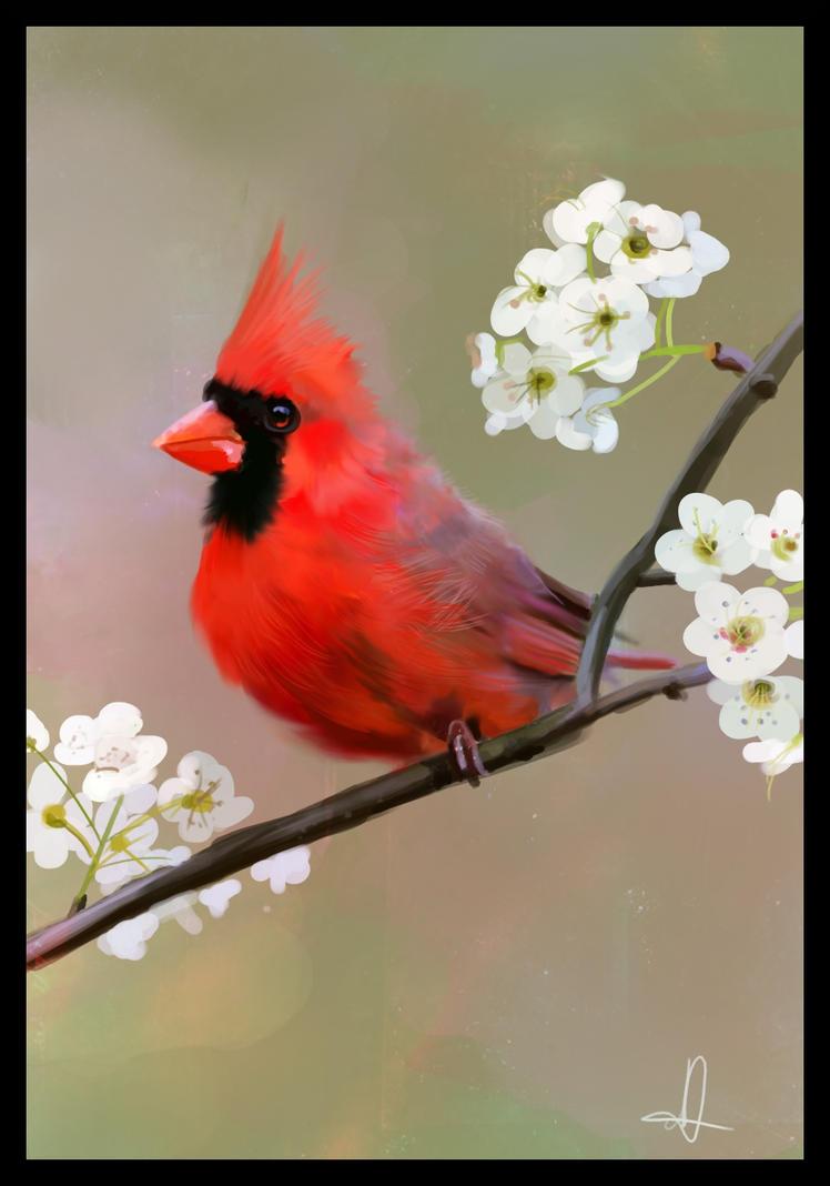 Red Robin Bird  Speed Painting