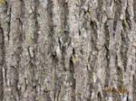 Bark 1 by taikunfoo