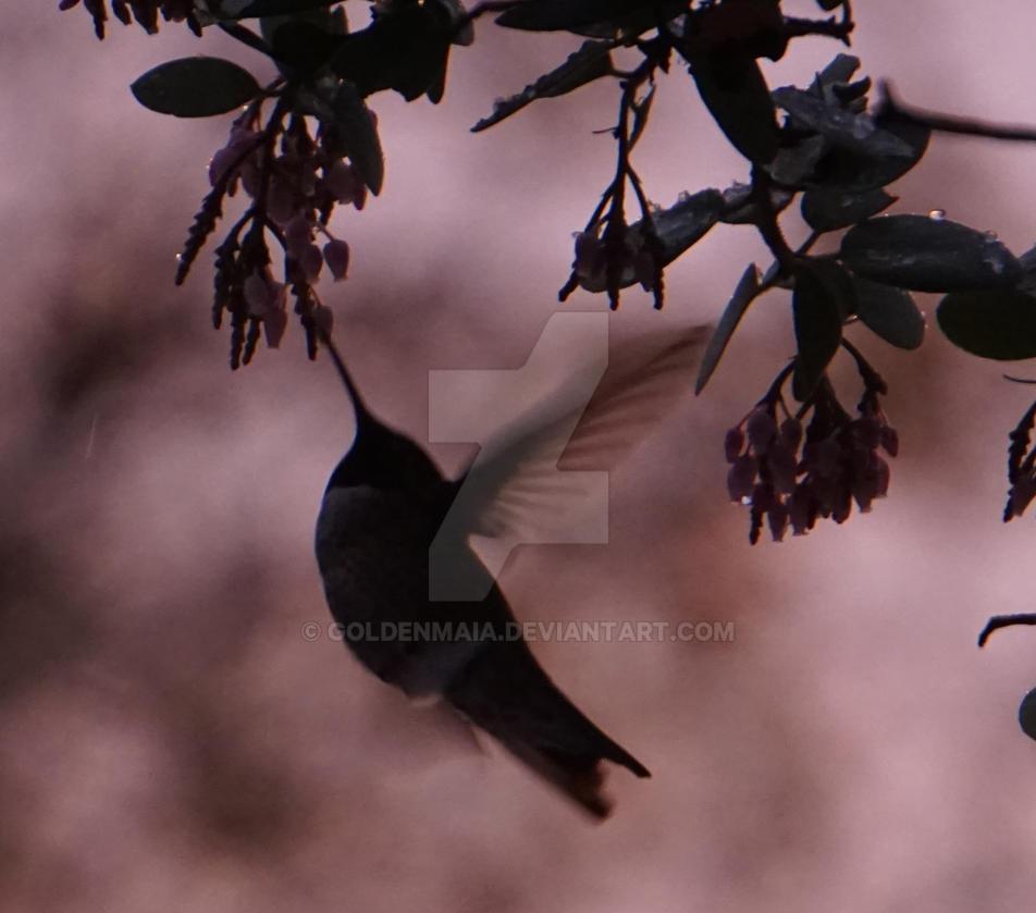 Hummingbird2 by GoldenMaia