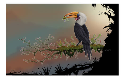 HornBill colored