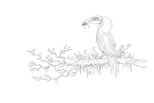 HornBill sketch