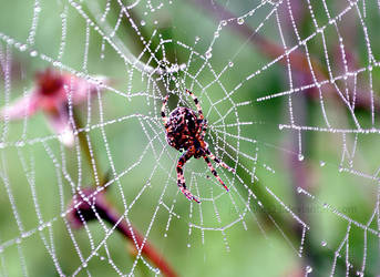Spider On Web by JAYSMILES23