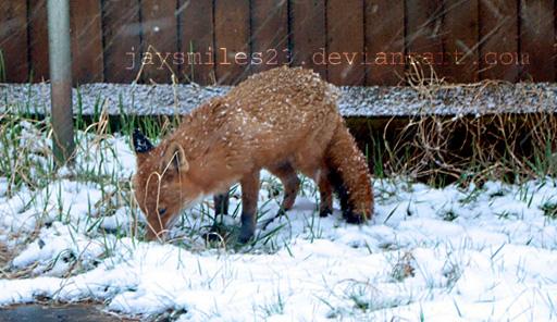 Fox 2 by JAYSMILES23