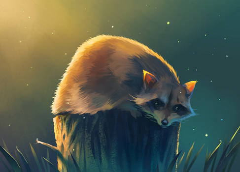 Racoon in the forest