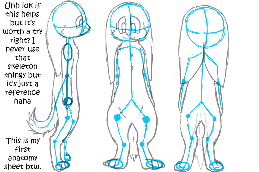 Character Anatomy Sheet: On Hind Legs by Ice-Artz on DeviantArt