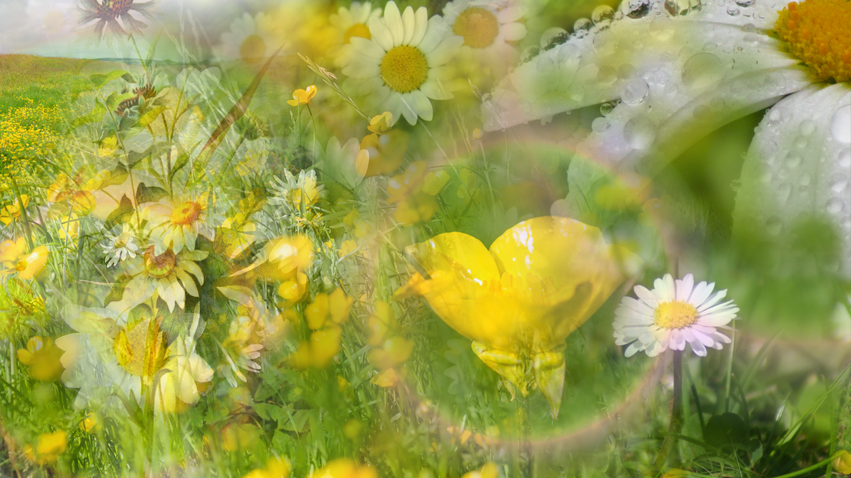 Buttercups and Daisies by RebeccaTripp