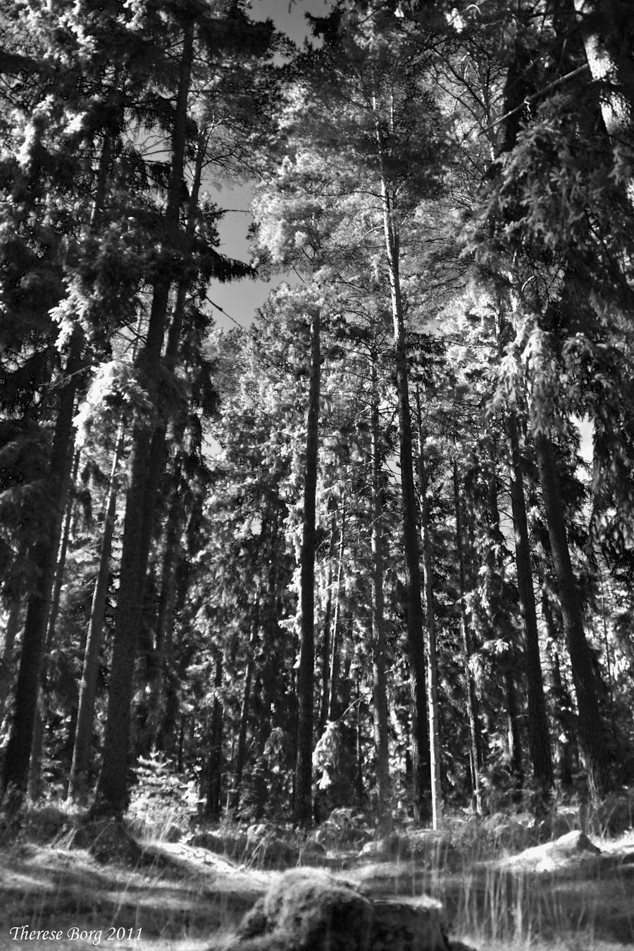 Black And White Forest 3 By ThereseBorg