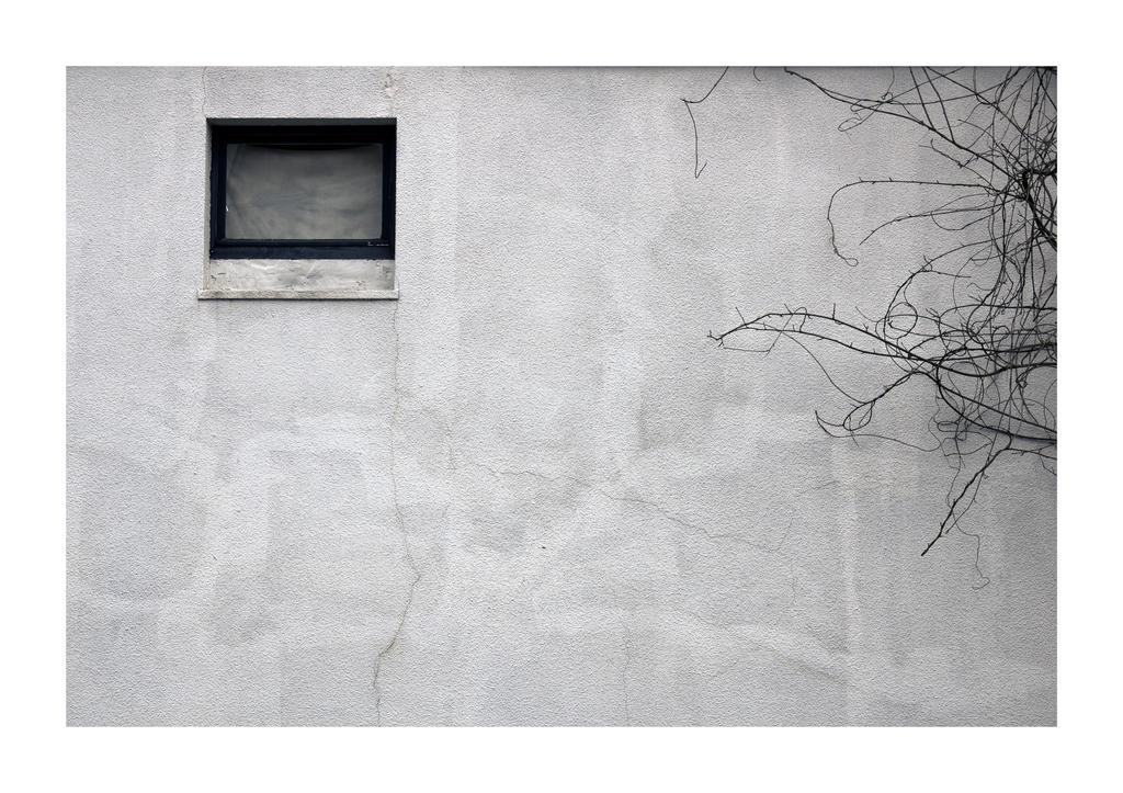 Windowpane by Season-5