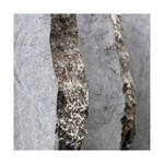 Stone in Focus