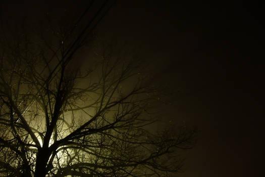 Timed Exposure: Tree In Fog