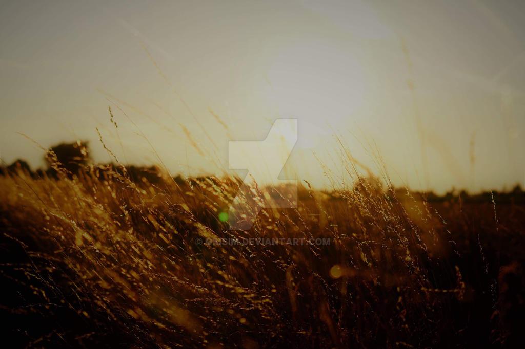 Sun by GiusiM