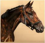 Baltimore by equusrevelrous