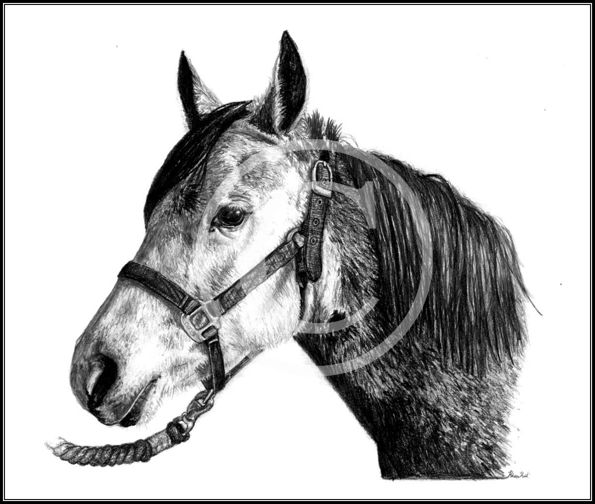 wildpolarbearqueen's  Abby by equusrevelrous
