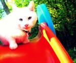 Chrome Cat