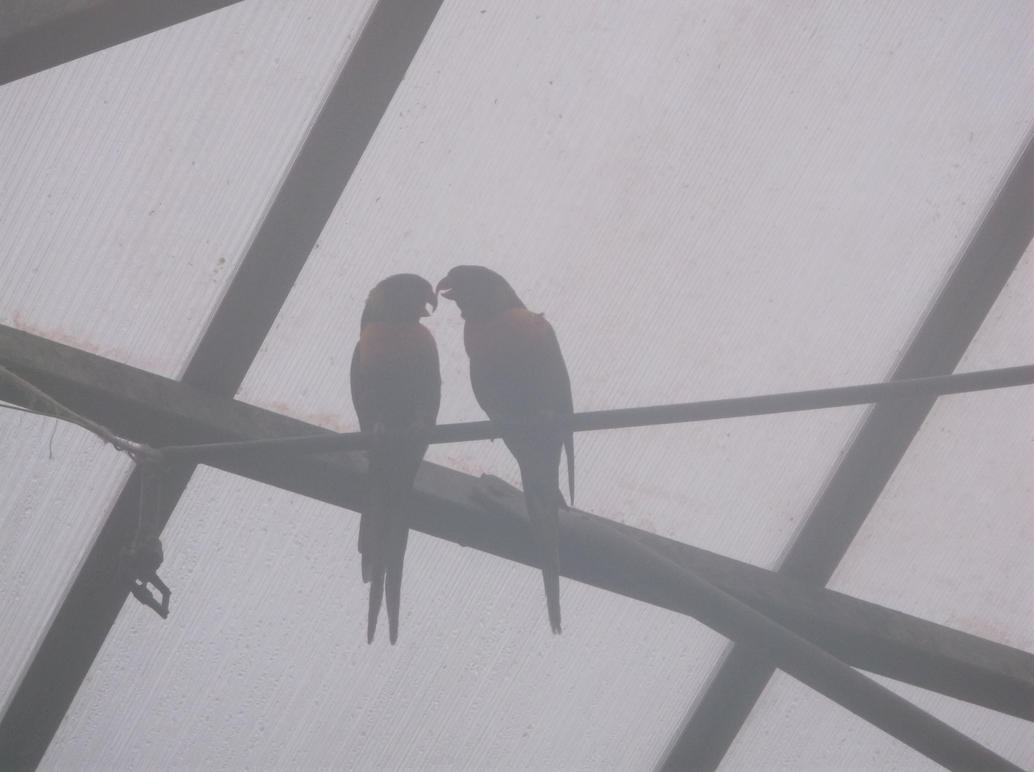birds_in_the_mist_by_forvenn20-d8lv1ot.j