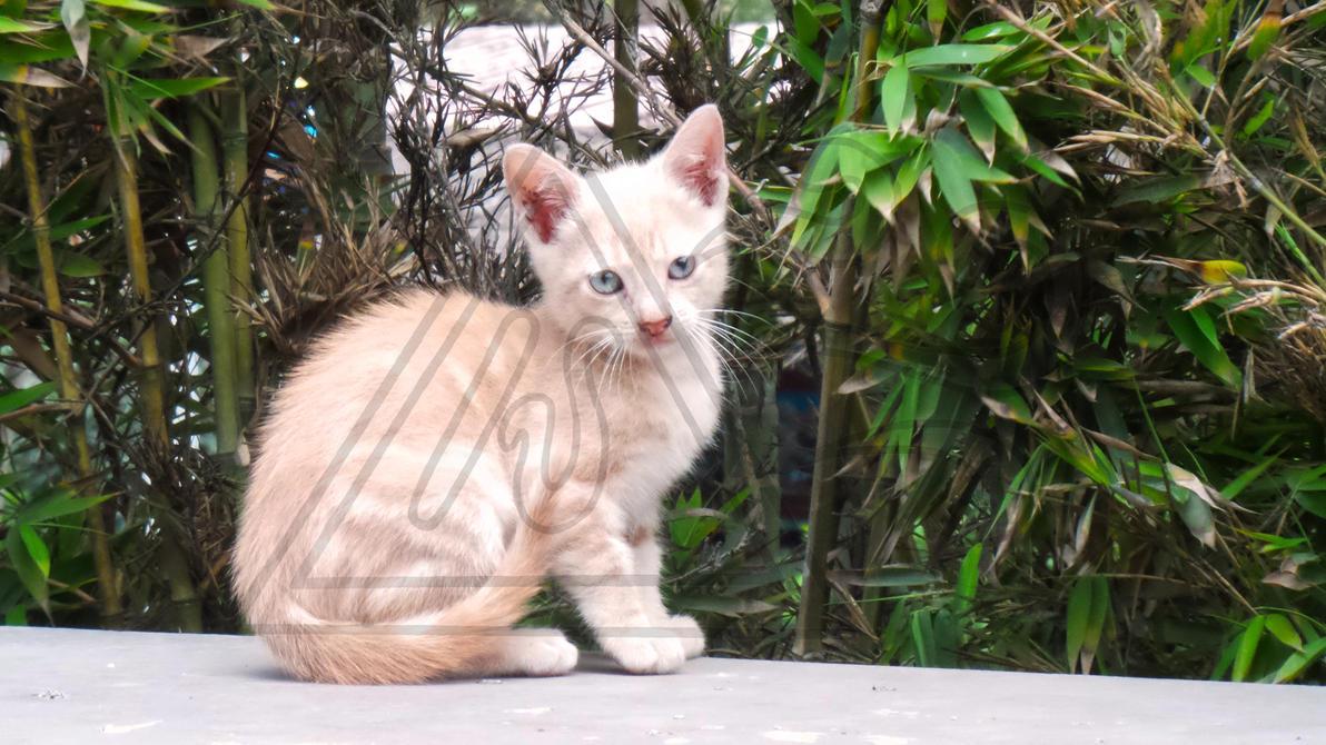 Kitty by Seirykun