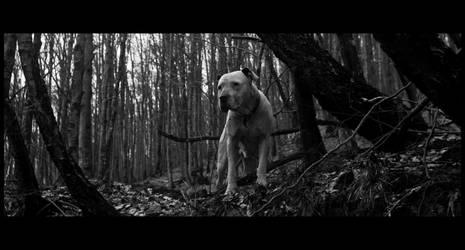foxy lady in a dark film