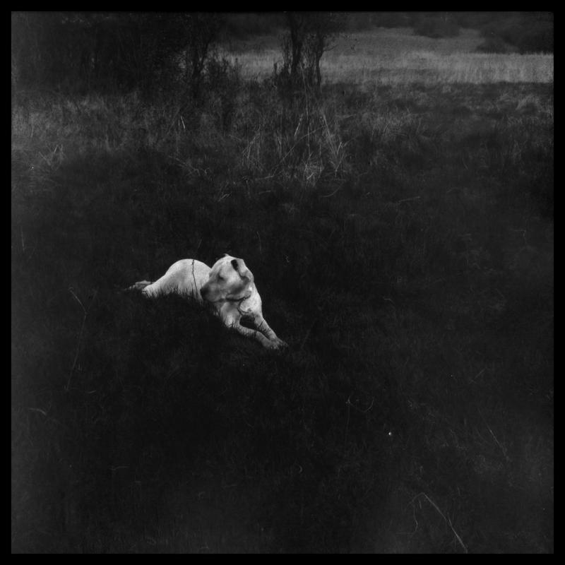 foxy lady in dark square movie by izzy68