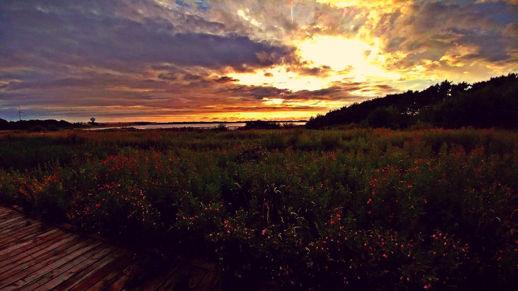 Sunset near the beach by BegginerPhotographer