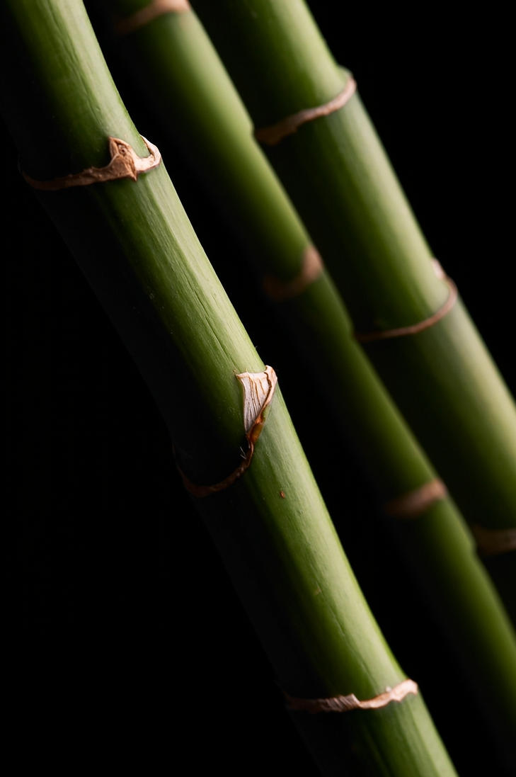 bamboo 01 by superstock