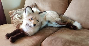Life-Size Fire and Ice Fox Plush