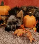 Happy Fall from Chari the Cross Fox Plush