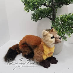 American Marten - Crouched
