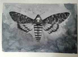 Inktober - Acherontia atropos