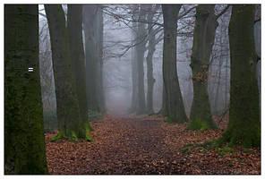 Foggy Liedberg I by theMuspilli