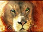 Colo' Lion