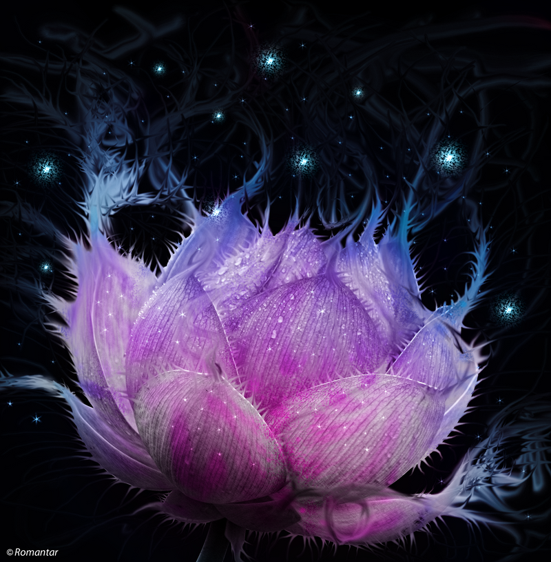 pink_lotus_by_romantar-d4pivqd.png