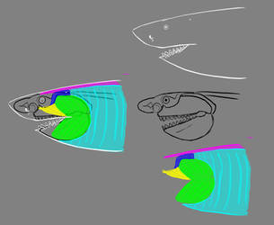 Megalodon Muscle And Skull Speculation by Mcraelodon
