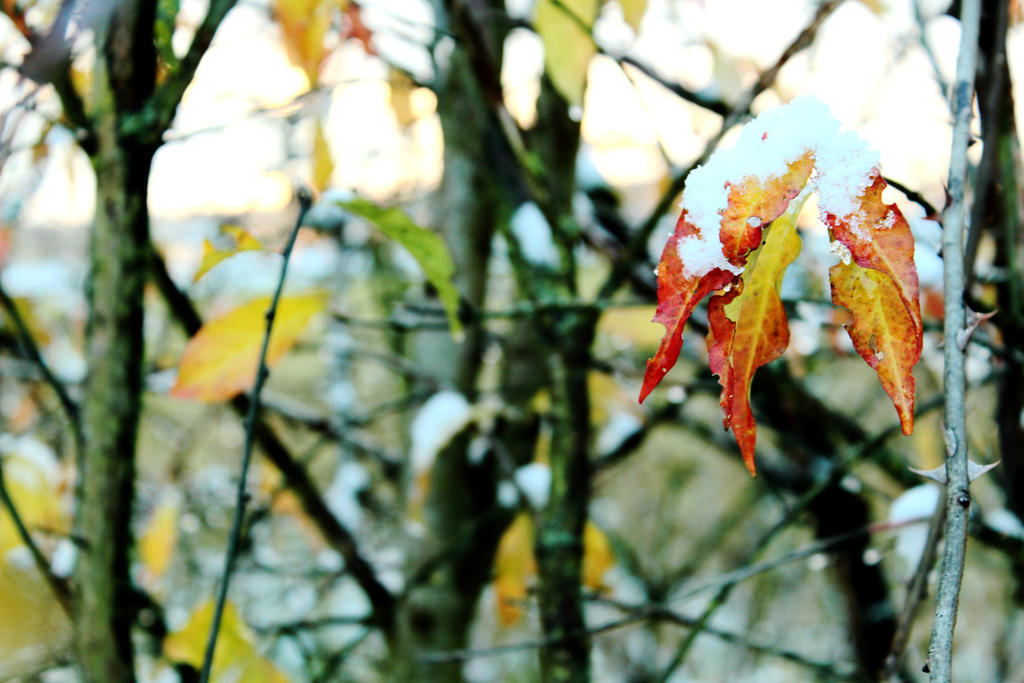Golden leaves, golden sky by MelieEinaleM