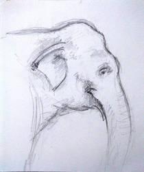 Old sketch 2 - elephant