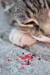 mini berries and a tabby